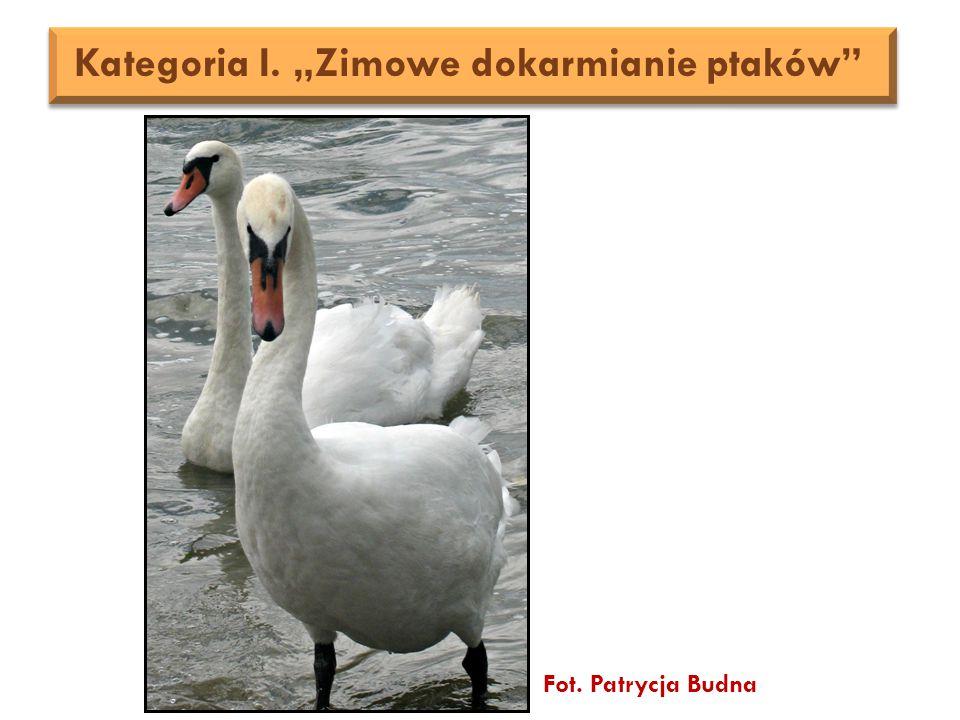"""Fot. Patrycja Budna Kategoria I. """"Zimowe dokarmianie ptaków"""
