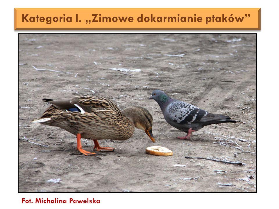 """Fot. Michalina Pawelska Kategoria I. """"Zimowe dokarmianie ptaków"""