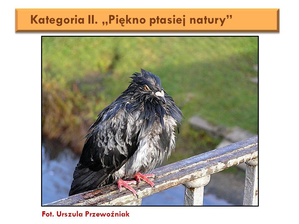 """Fot. Urszula Przewoźniak Kategoria II. """"Piękno ptasiej natury"""