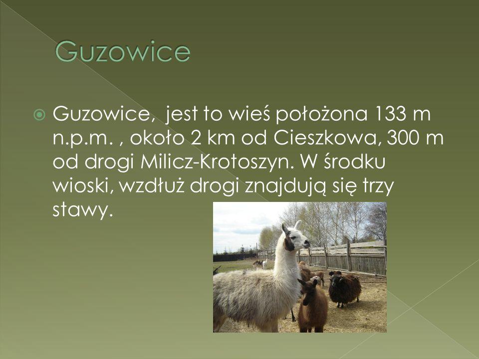  Guzowice, jest to wieś położona 133 m n.p.m., około 2 km od Cieszkowa, 300 m od drogi Milicz-Krotoszyn. W środku wioski, wzdłuż drogi znajdują się t
