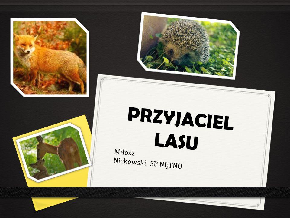 PRZYJACIEL LASU Miłosz Nickowski SP NĘTNO