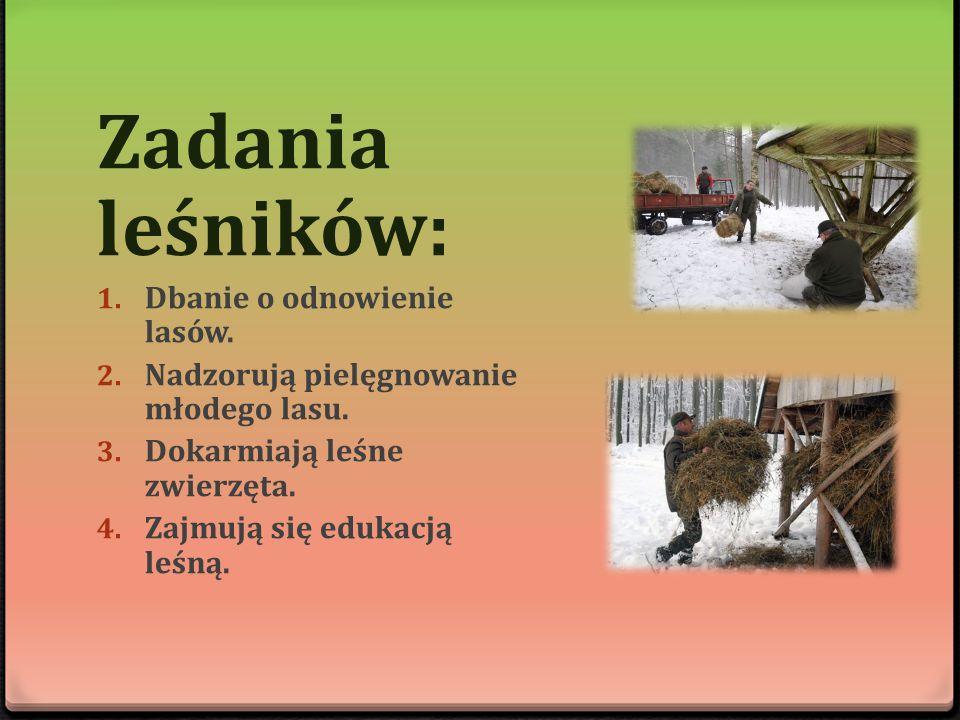 Zadania leśników: 1. Dbanie o odnowienie lasów. 2. Nadzorują pielęgnowanie młodego lasu. 3. Dokarmiają leśne zwierzęta. 4. Zajmują się edukacją leśną.