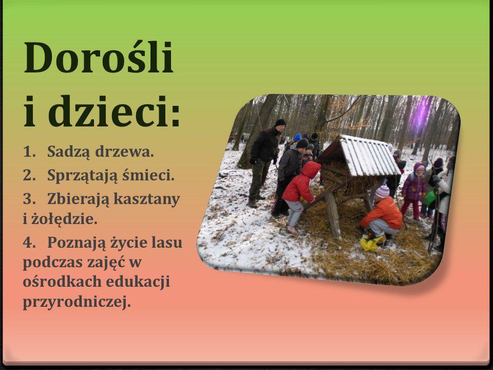 Dorośli i dzieci: 1.Sadzą drzewa. 2.Sprzątają śmieci. 3.Zbierają kasztany i żołędzie. 4.Poznają życie lasu podczas zajęć w ośrodkach edukacji przyrodn