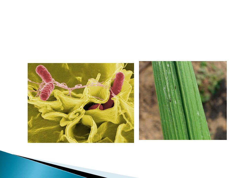 Bakterie i grzyby powodują wiele zniszczeń i są zagrożeniem dla człowieka i zwierząt, które znajdują się w pobliżu.