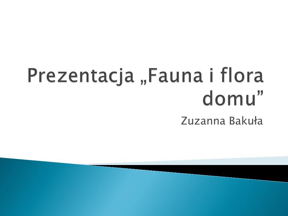 Zuzanna Bakuła