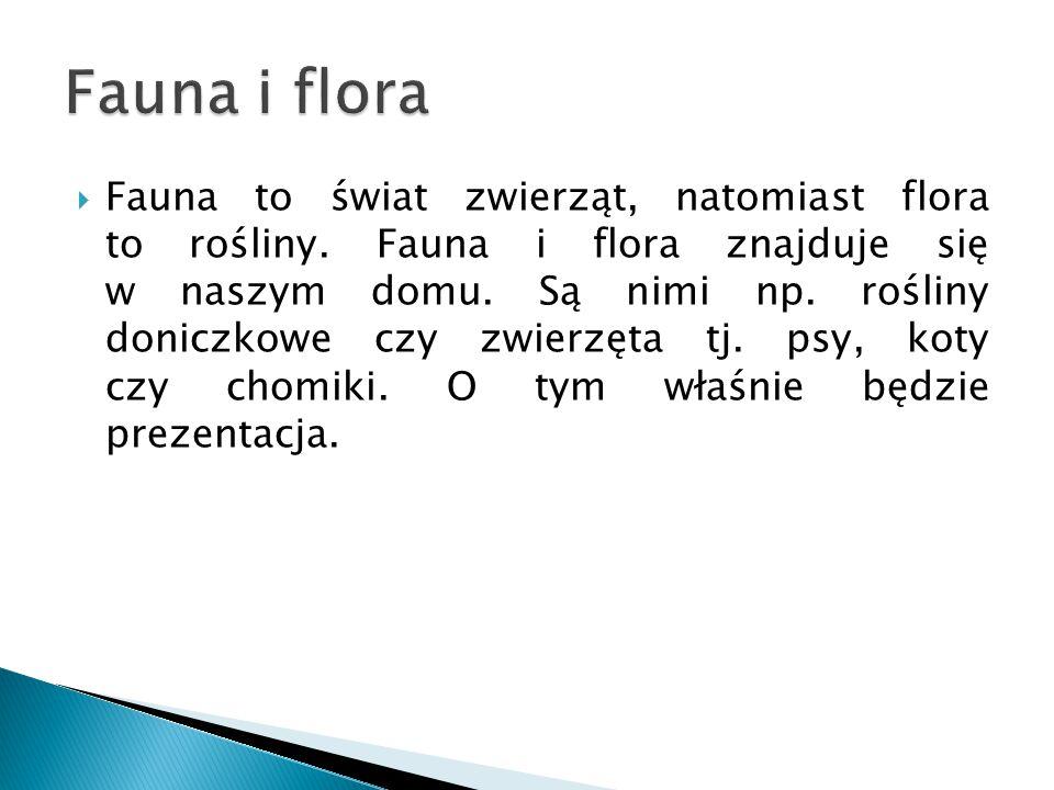  Fauna to świat zwierząt, natomiast flora to rośliny. Fauna i flora znajduje się w naszym domu. Są nimi np. rośliny doniczkowe czy zwierzęta tj. psy,