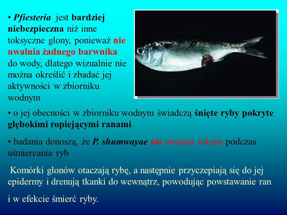 Pfiesteria jest bardziej niebezpieczna niż inne toksyczne glony, ponieważ nie uwalnia żadnego barwnika do wody, dlatego wizualnie nie można określić i zbadać jej aktywności w zbiorniku wodnym o jej obecności w zbiorniku wodnym świadczą śnięte ryby pokryte głębokimi ropiejącymi ranami badania donoszą, że P.