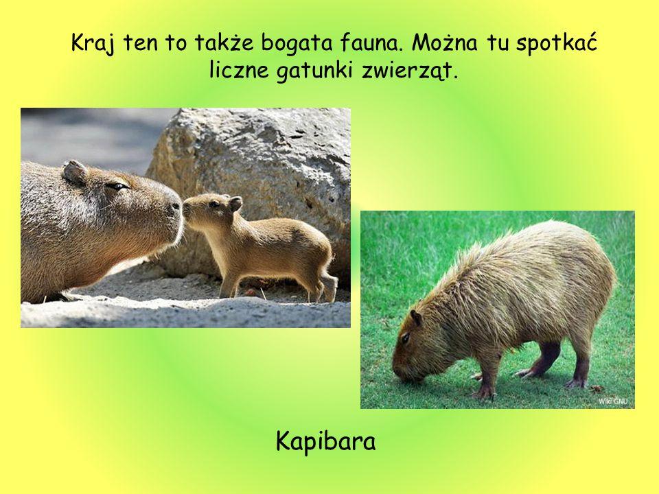 Kraj ten to także bogata fauna. Można tu spotkać liczne gatunki zwierząt. Kapibara