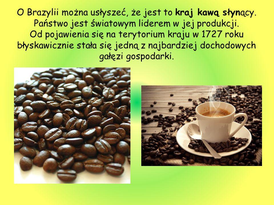 O Brazylii można usłyszeć, że jest to kraj kawą słynący. Państwo jest światowym liderem w jej produkcji. Od pojawienia się na terytorium kraju w 1727