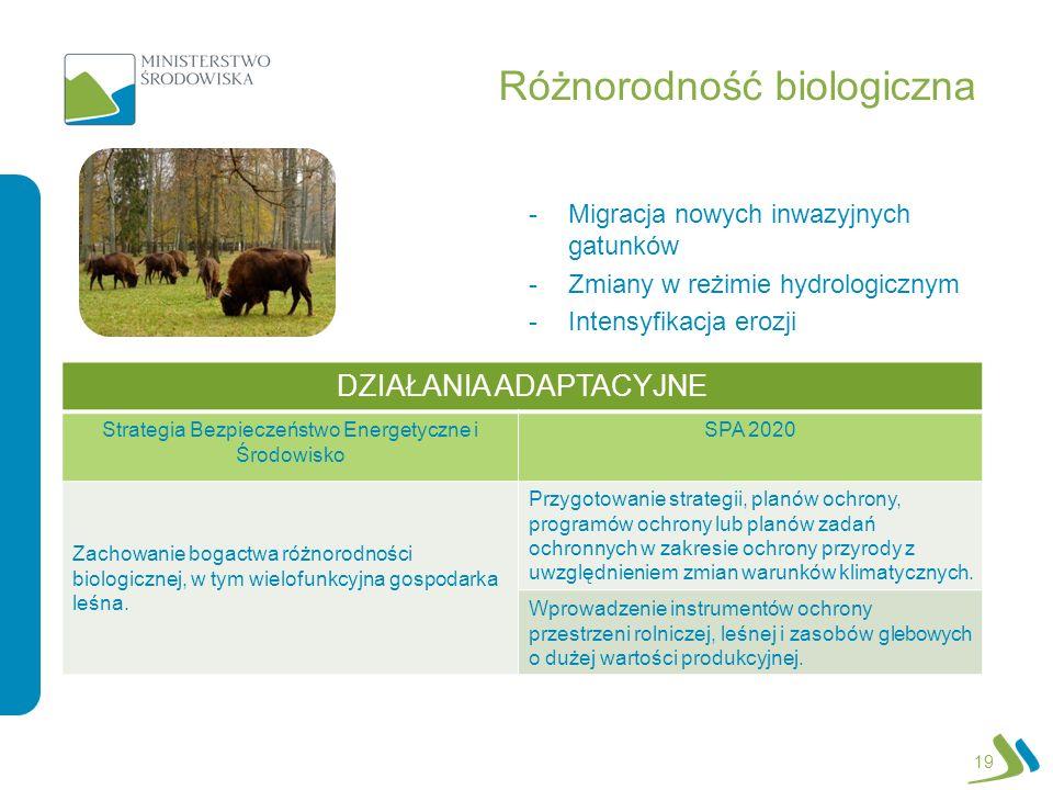 Różnorodność biologiczna -Migracja nowych inwazyjnych gatunków -Zmiany w reżimie hydrologicznym -Intensyfikacja erozji 19 DZIAŁANIA ADAPTACYJNE Strate