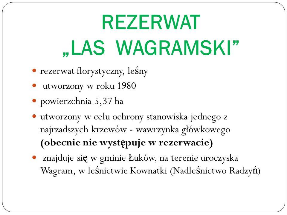 REZERWAT LAS WAGRAMSKI rezerwat florystyczny, le ś ny utworzony w roku 1980 powierzchnia 5,37 ha utworzony w celu ochrony stanowiska jednego z najrzadszych krzewów - wawrzynka główkowego (obecnie nie wyst ę puje w rezerwacie) znajduje si ę w gminie Łuków, na terenie uroczyska Wagram, w le ś nictwie Kownatki (Nadle ś nictwo Radzy ń )