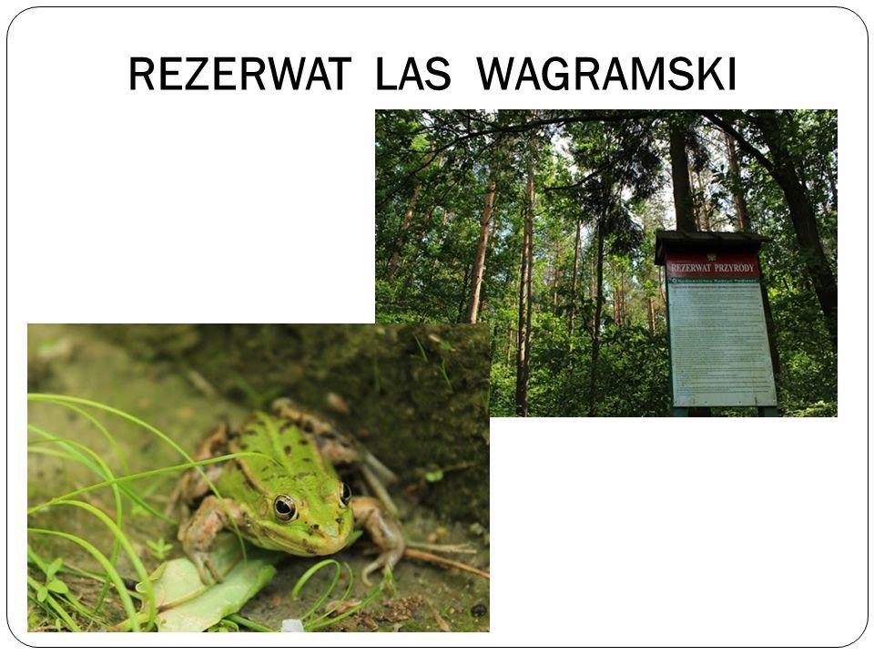 REZERWAT LAS WAGRAMSKI