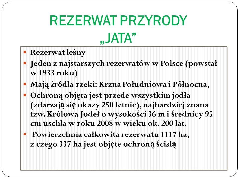 REZERWAT PRZYRODY JATA Rezerwat le ś ny Jeden z najstarszych rezerwatów w Polsce (powstał w 1933 roku) Maj ą ź ródła rzeki: Krzna Południowa i Północna, Ochron ą obj ę ta jest przede wszystkim jodła (zdarzaj ą si ę okazy 250 letnie), najbardziej znana tzw.