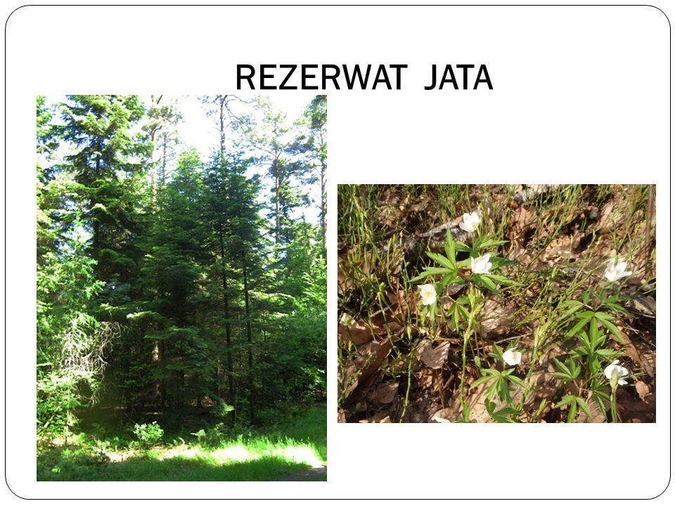 REZERWAT JATA