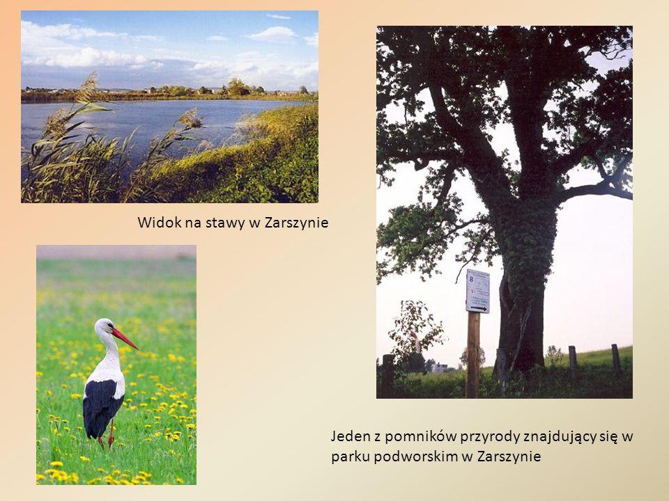 Widok na stawy w Zarszynie Jeden z pomników przyrody znajdujący się w parku podworskim w Zarszynie