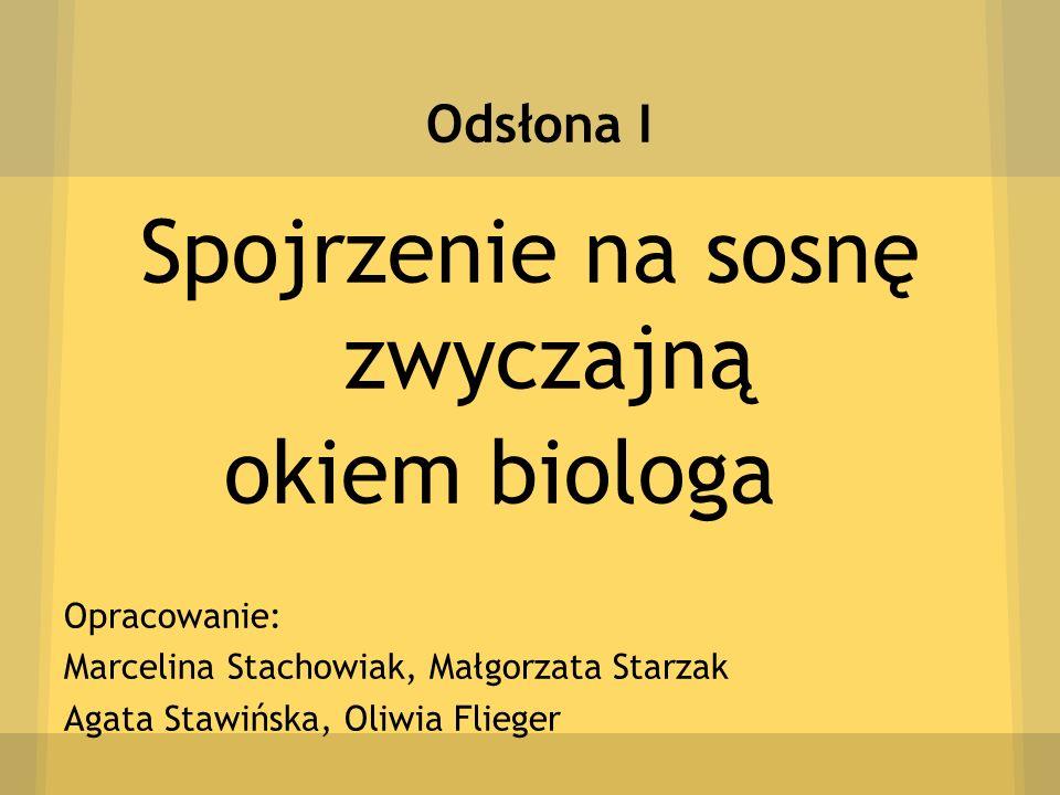 Odsłona I Spojrzenie na sosnę zwyczajną okiem biologa Opracowanie: Marcelina Stachowiak, Małgorzata Starzak Agata Stawińska, Oliwia Flieger