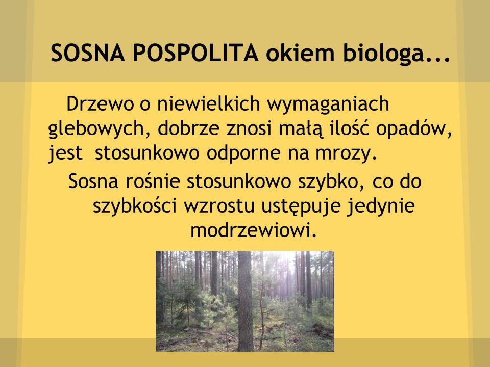 SOSNA POSPOLITA okiem biologa... Drzewo o niewielkich wymaganiach glebowych, dobrze znosi małą ilość opadów, jest stosunkowo odporne na mrozy. Sosna r