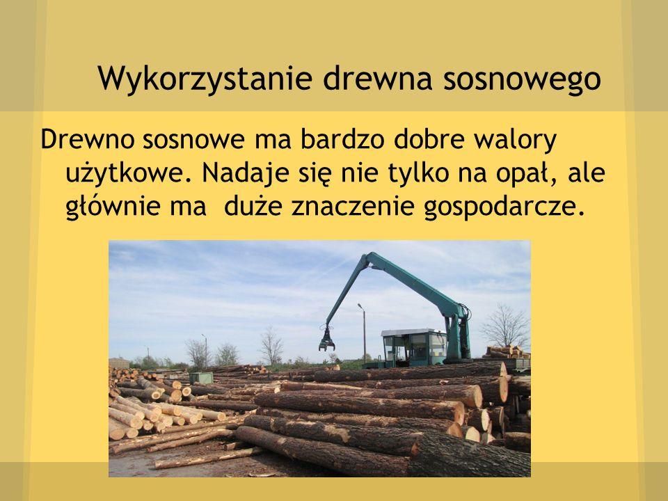 Wykorzystanie drewna sosnowego Drewno sosnowe ma bardzo dobre walory użytkowe. Nadaje się nie tylko na opał, ale głównie ma duże znaczenie gospodarcze