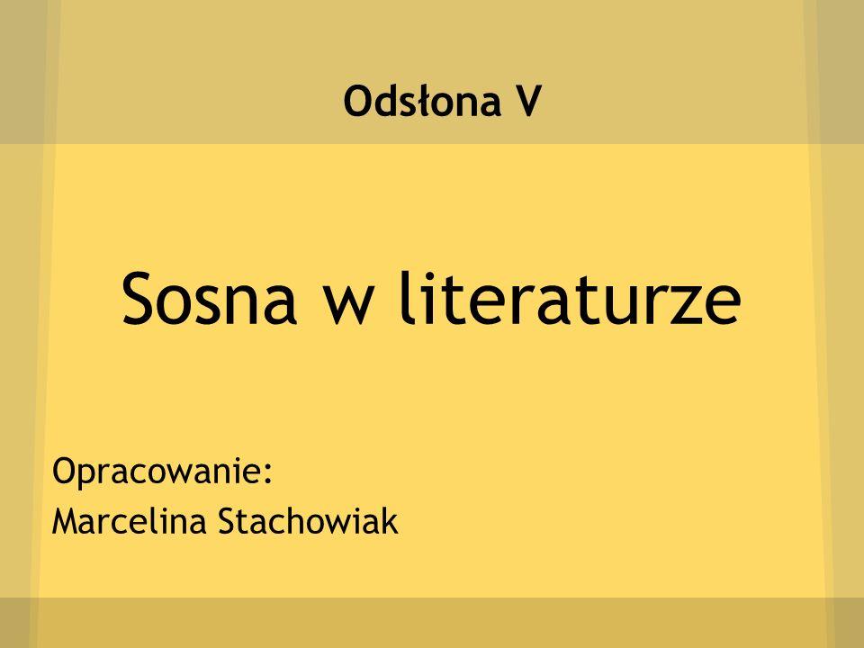 Odsłona V Sosna w literaturze Opracowanie: Marcelina Stachowiak