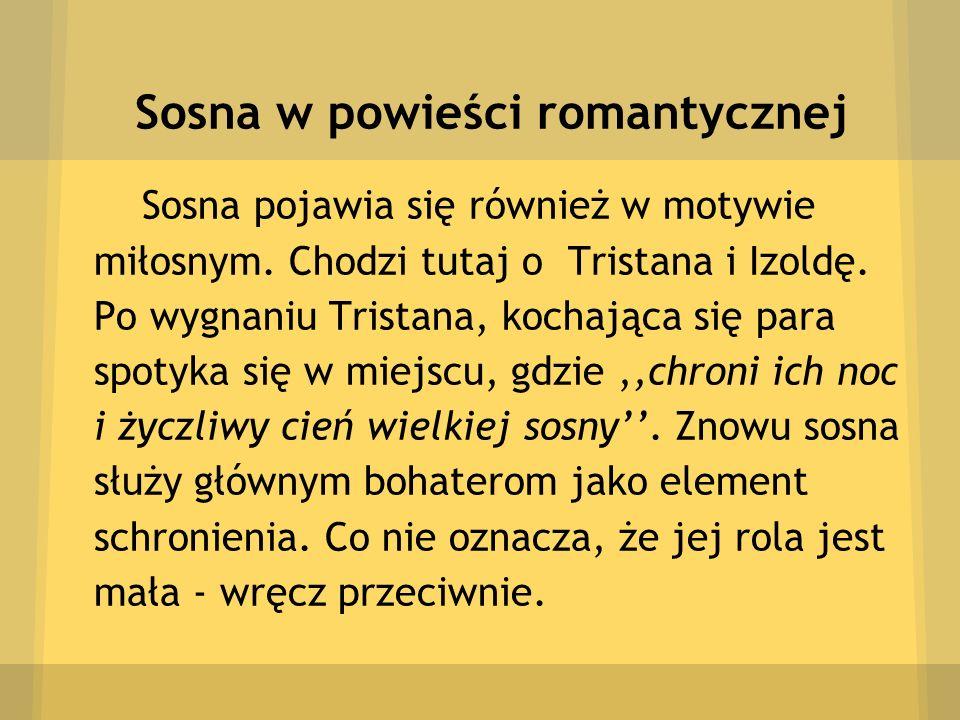Sosna w powieści romantycznej Sosna pojawia się również w motywie miłosnym. Chodzi tutaj o Tristana i Izoldę. Po wygnaniu Tristana, kochająca się para