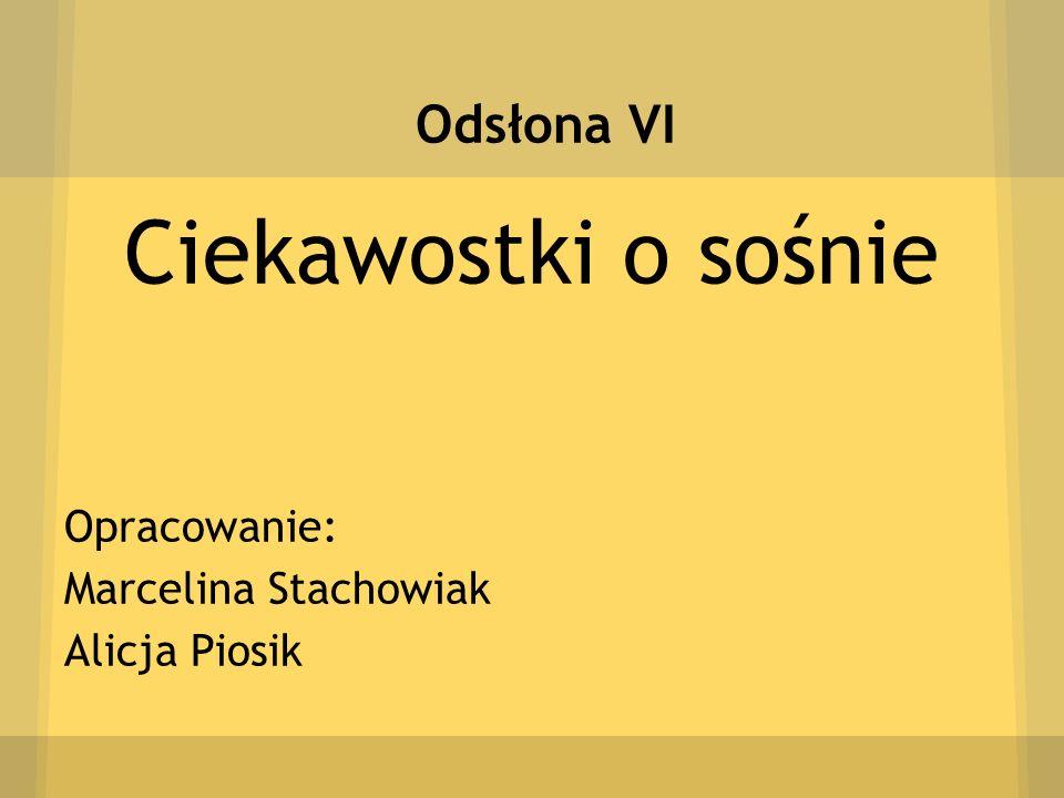 Odsłona VI Ciekawostki o sośnie Opracowanie: Marcelina Stachowiak Alicja Piosik