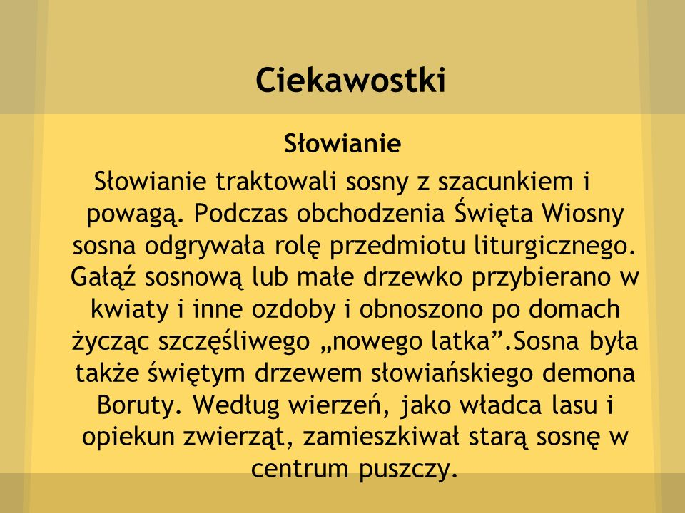 Ciekawostki Słowianie Słowianie traktowali sosny z szacunkiem i powagą. Podczas obchodzenia Święta Wiosny sosna odgrywała rolę przedmiotu liturgiczneg