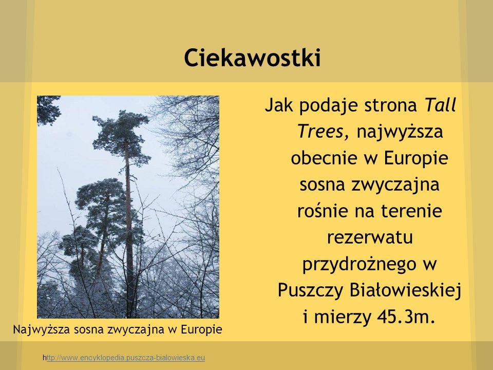 Ciekawostki Najwyższa sosna zwyczajna w Europie Jak podaje strona Tall Trees, najwyższa obecnie w Europie sosna zwyczajna rośnie na terenie rezerwatu
