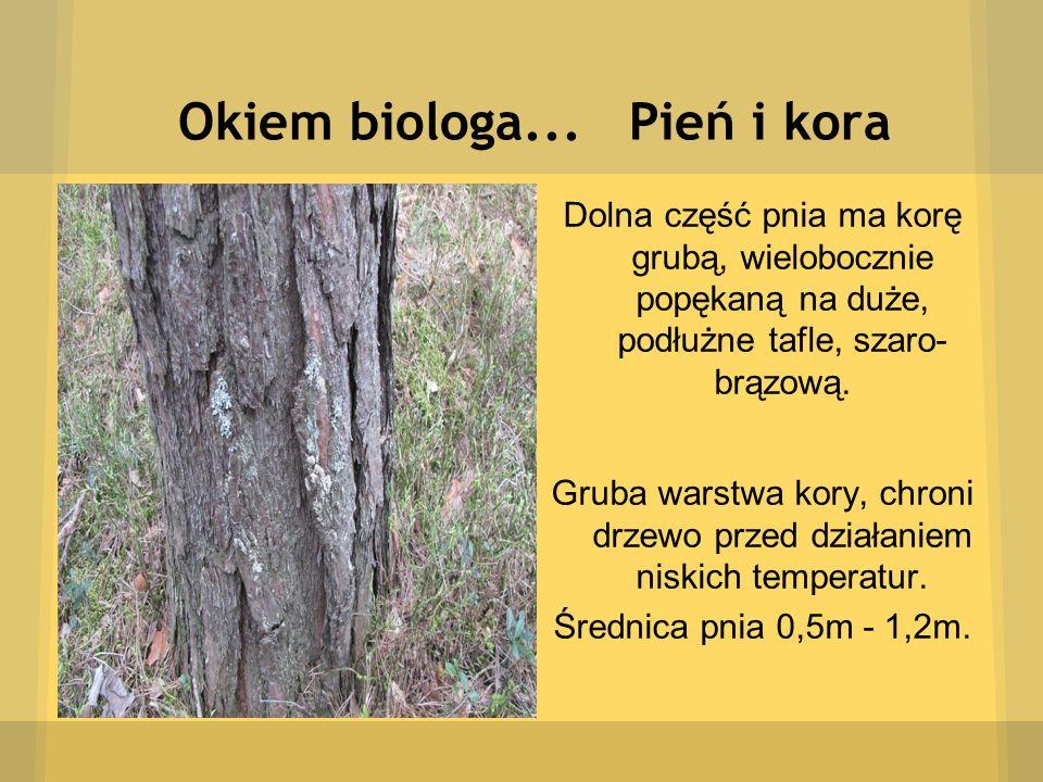 Okiem biologa... Pień i kora Dolna część pnia ma korę grubą, wielobocznie popękaną na duże, podłużne tafle, szaro- brązową. Gruba warstwa kory, chroni