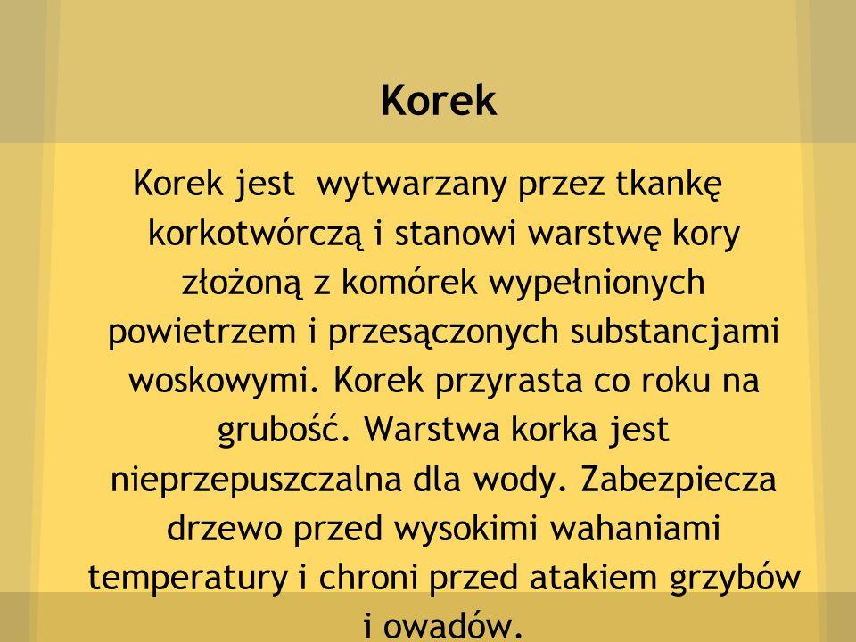 Korek Korek jest wytwarzany przez tkankę korkotwórczą i stanowi warstwę kory złożoną z komórek wypełnionych powietrzem i przesączonych substancjami wo