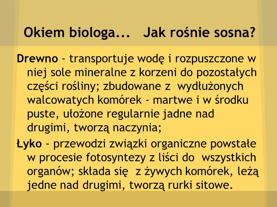 Okiem biologa... Jak rośnie sosna? Drewno - transportuje wodę i rozpuszczone w niej sole mineralne z korzeni do pozostałych części rośliny; zbudowane