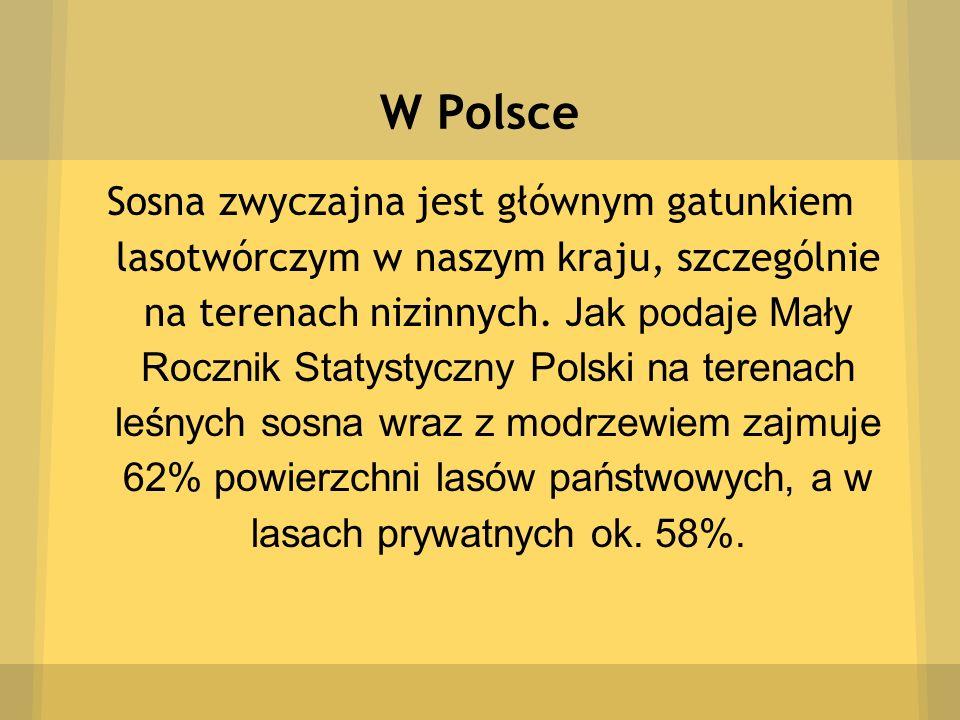 W Polsce Sosna zwyczajna jest głównym gatunkiem lasotwórczym w naszym kraju, szczególnie na terenach nizinnych. J ak podaje Mały Rocznik Statystyczny