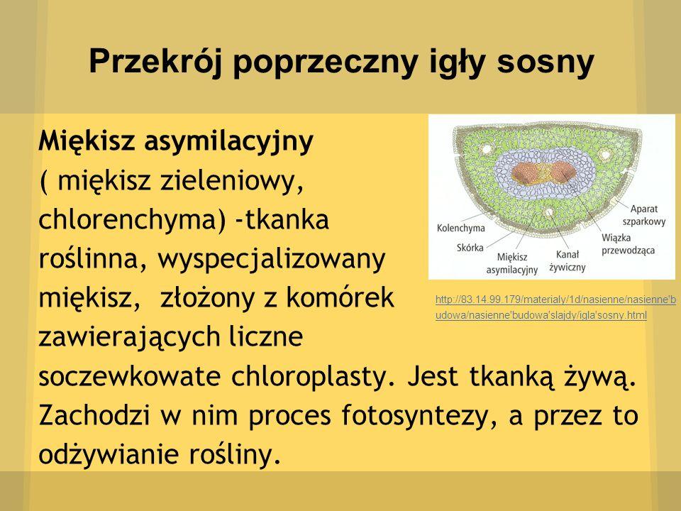 Przekrój poprzeczny igły sosny Miękisz asymilacyjny ( miękisz zieleniowy, chlorenchyma) -tkanka roślinna, wyspecjalizowany miękisz, złożony z komórek