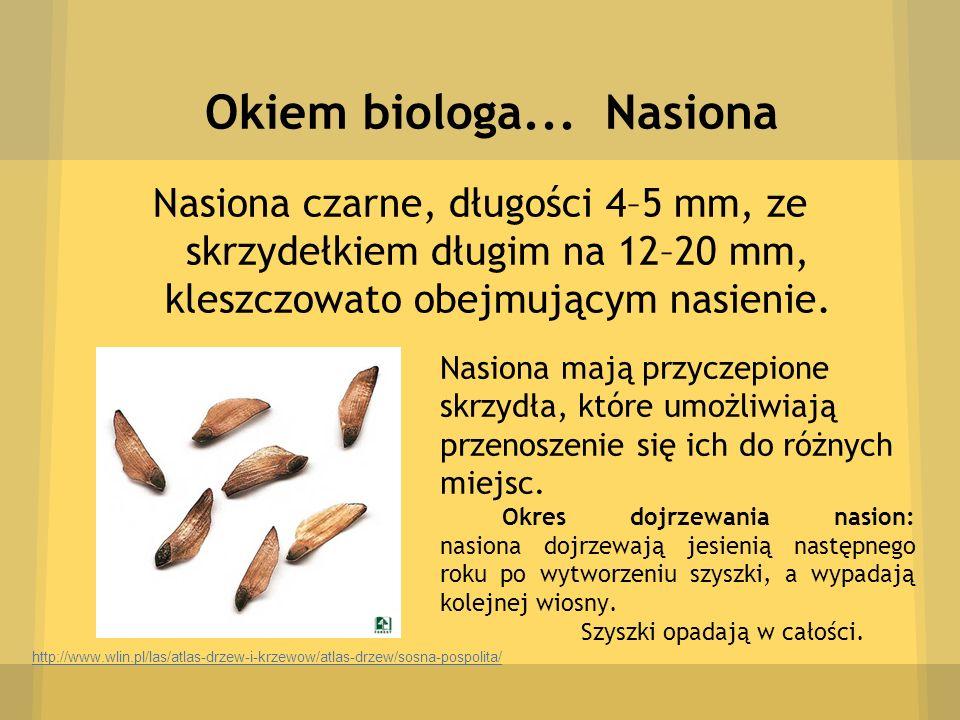 Okiem biologa... Nasiona Nasiona czarne, długości 4–5 mm, ze skrzydełkiem długim na 12–20 mm, kleszczowato obejmującym nasienie. http://www.wlin.pl/la