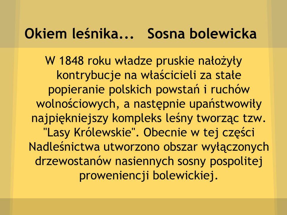 Okiem leśnika... Sosna bolewicka W 1848 roku władze pruskie nałożyły kontrybucje na właścicieli za stałe popieranie polskich powstań i ruchów wolności