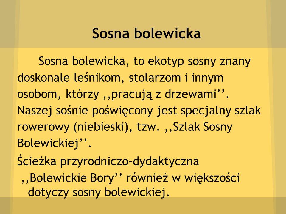 Sosna bolewicka Sosna bolewicka, to ekotyp sosny znany doskonale leśnikom, stolarzom i innym osobom, którzy,,pracują z drzewami. Naszej sośnie poświęc