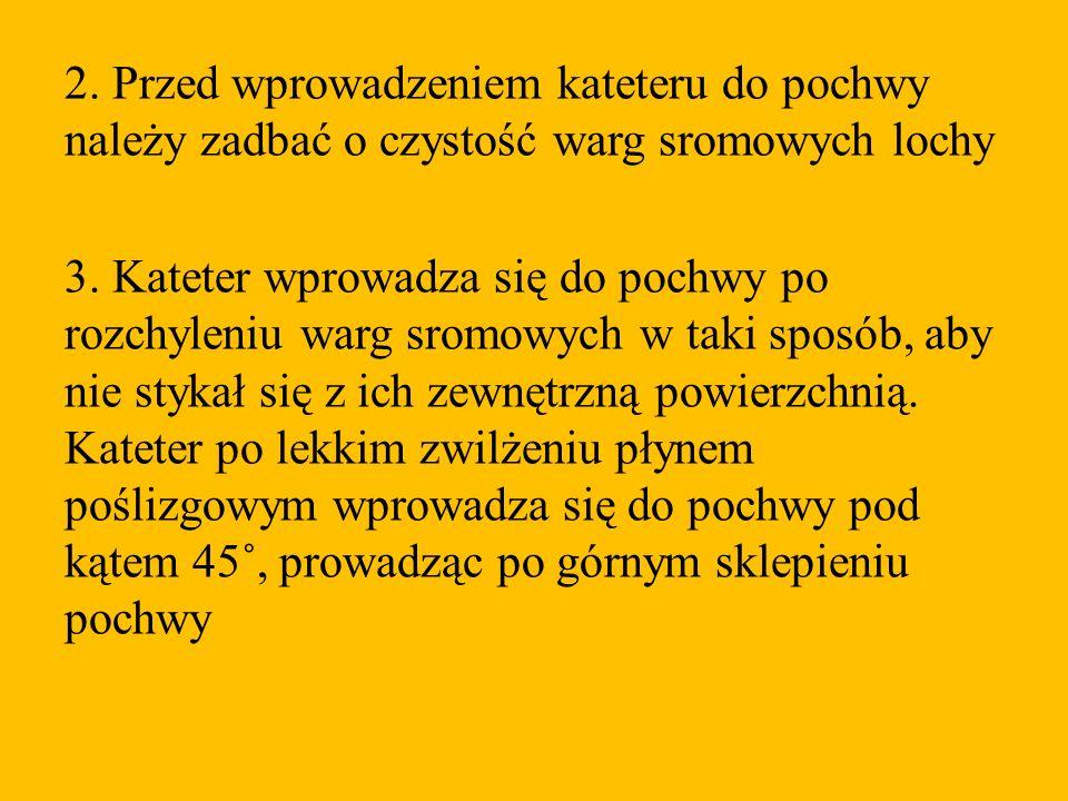 2. Przed wprowadzeniem kateteru do pochwy należy zadbać o czystość warg sromowych lochy 3. Kateter wprowadza się do pochwy po rozchyleniu warg sromowy
