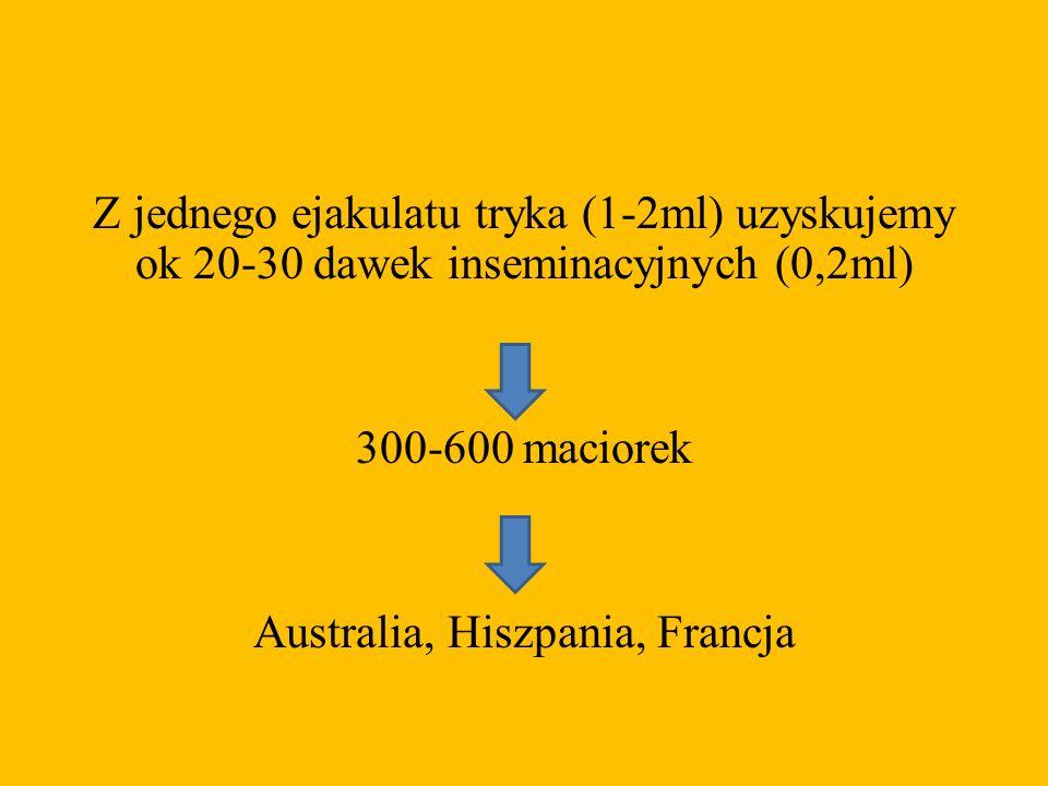 Z jednego ejakulatu tryka (1-2ml) uzyskujemy ok 20-30 dawek inseminacyjnych (0,2ml) 300-600 maciorek Australia, Hiszpania, Francja
