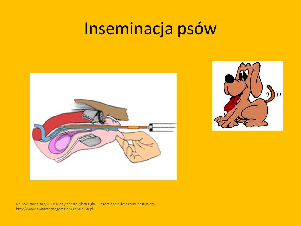 Inseminacja psów Na podstawie artykułu: Kiedy natura płata figla – inseminacja świerzym nasieniem http://www.swiatczarnegoteriera.republika.pl