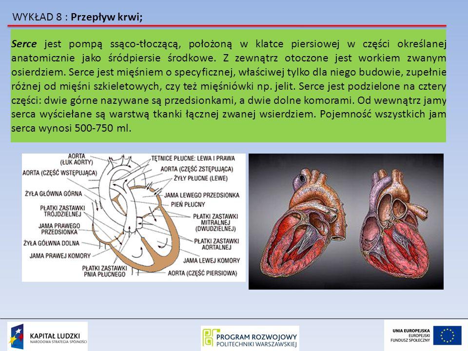 WYKŁAD 8 : Przepływ krwi; Serce jest pompą ssąco-tłoczącą, położoną w klatce piersiowej w części określanej anatomicznie jako śródpiersie środkowe. Z