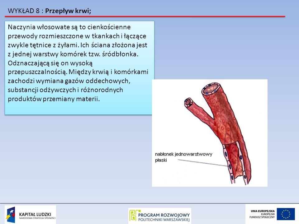 WYKŁAD 8 : Przepływ krwi; Naczynia włosowate są to cienkościenne przewody rozmieszczone w tkankach i łączące zwykle tętnice z żyłami. Ich ściana złożo