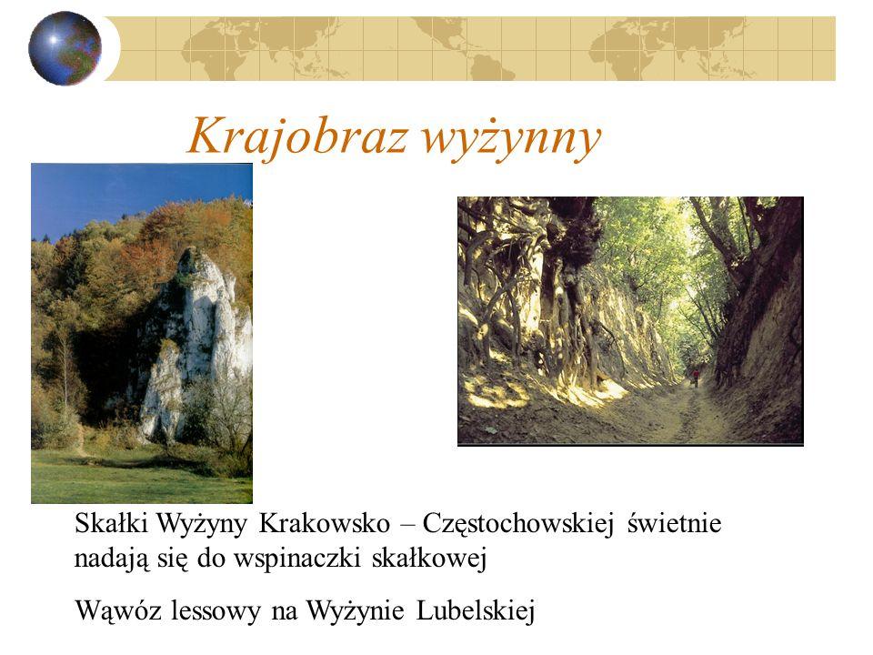 Krajobraz wyżynny Skałki Wyżyny Krakowsko – Częstochowskiej świetnie nadają się do wspinaczki skałkowej Wąwóz lessowy na Wyżynie Lubelskiej