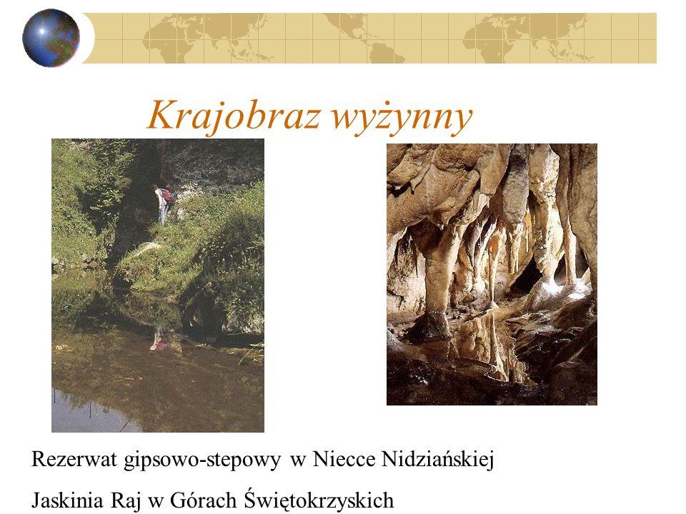 Krajobraz wyżynny Rezerwat gipsowo-stepowy w Niecce Nidziańskiej Jaskinia Raj w Górach Świętokrzyskich