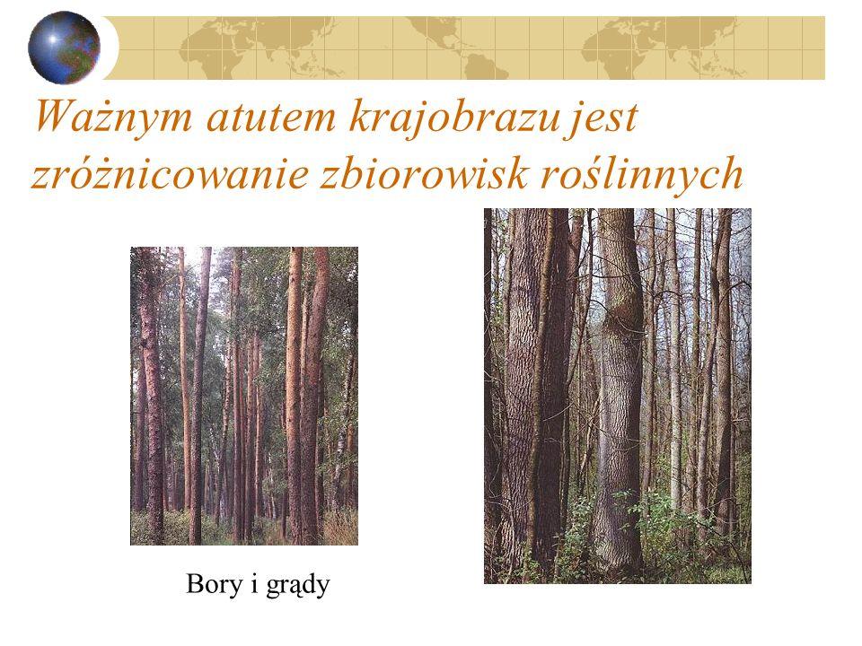 Ważnym atutem krajobrazu jest zróżnicowanie zbiorowisk roślinnych Bory i grądy