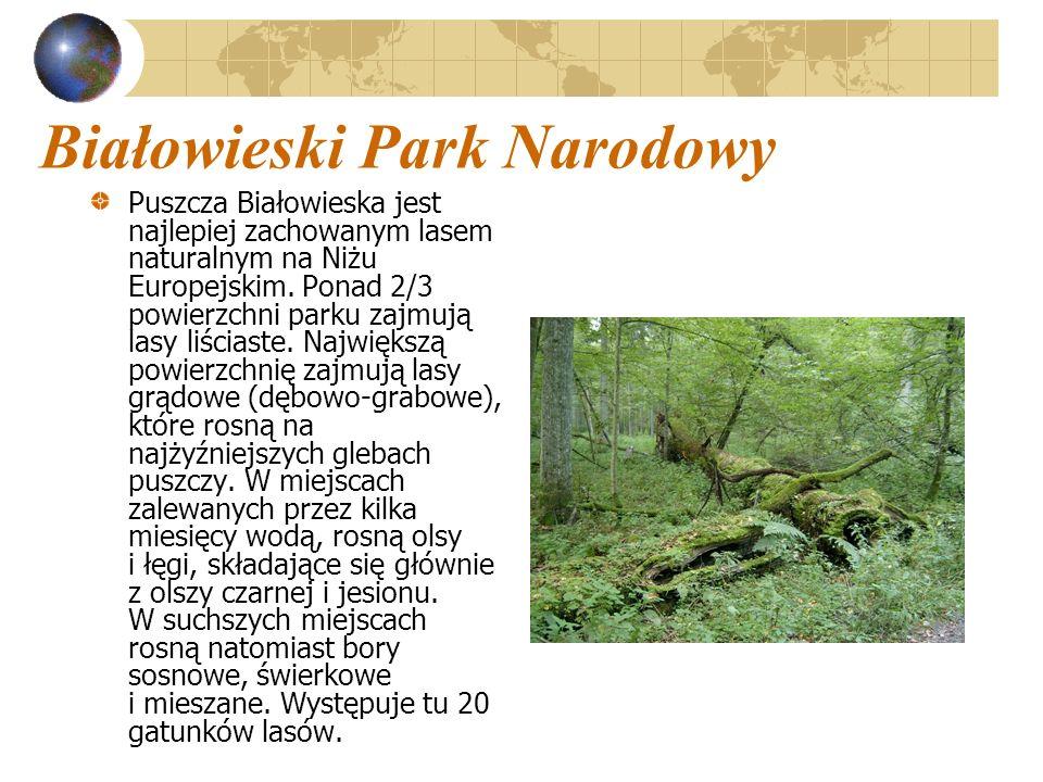 Białowieski Park Narodowy Puszcza Białowieska jest najlepiej zachowanym lasem naturalnym na Niżu Europejskim. Ponad 2/3 powierzchni parku zajmują lasy