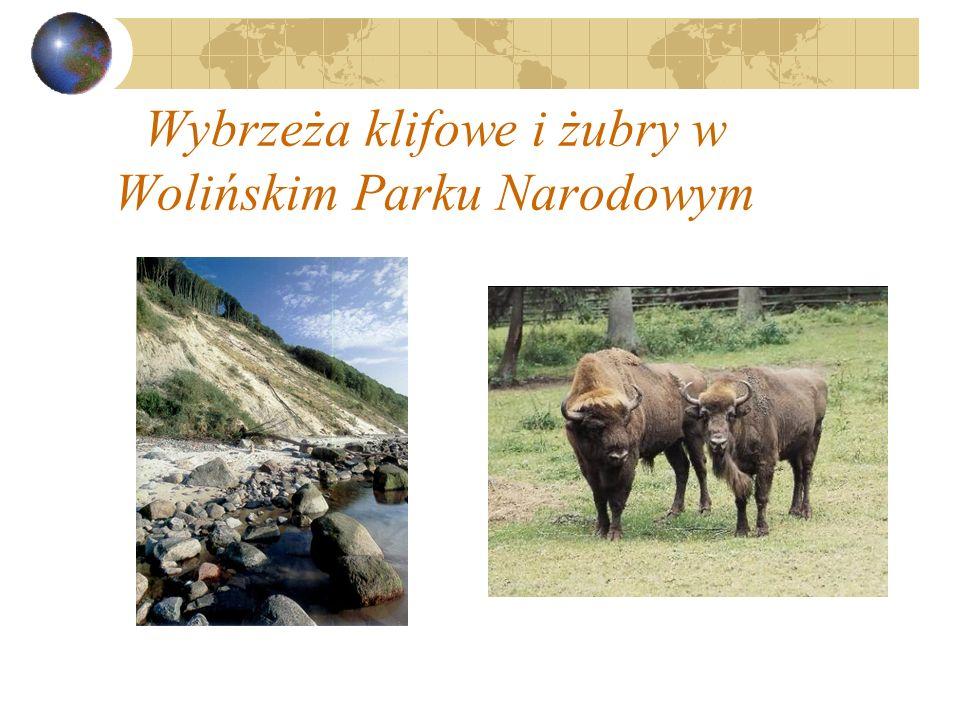 Wybrzeża klifowe i żubry w Wolińskim Parku Narodowym