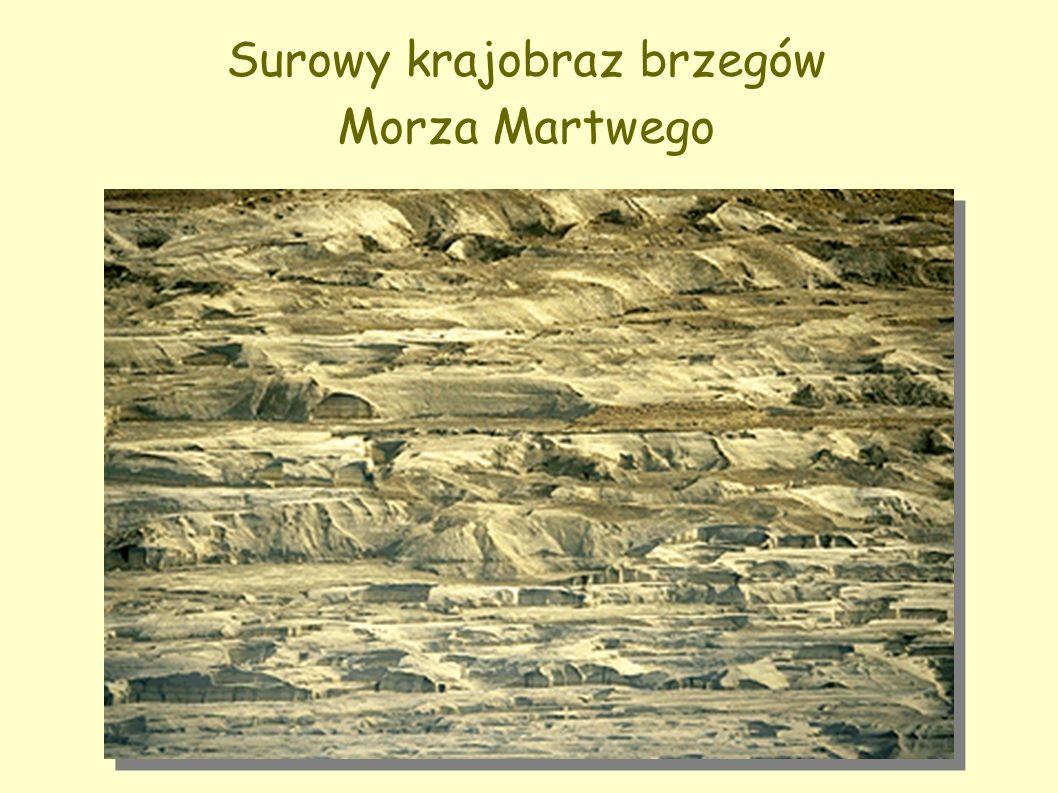 Surowy krajobraz brzegów Morza Martwego