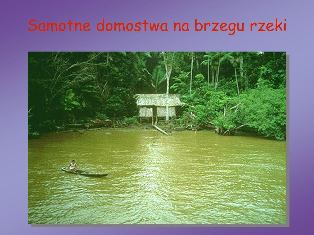 Samotne domostwa na brzegu rzeki