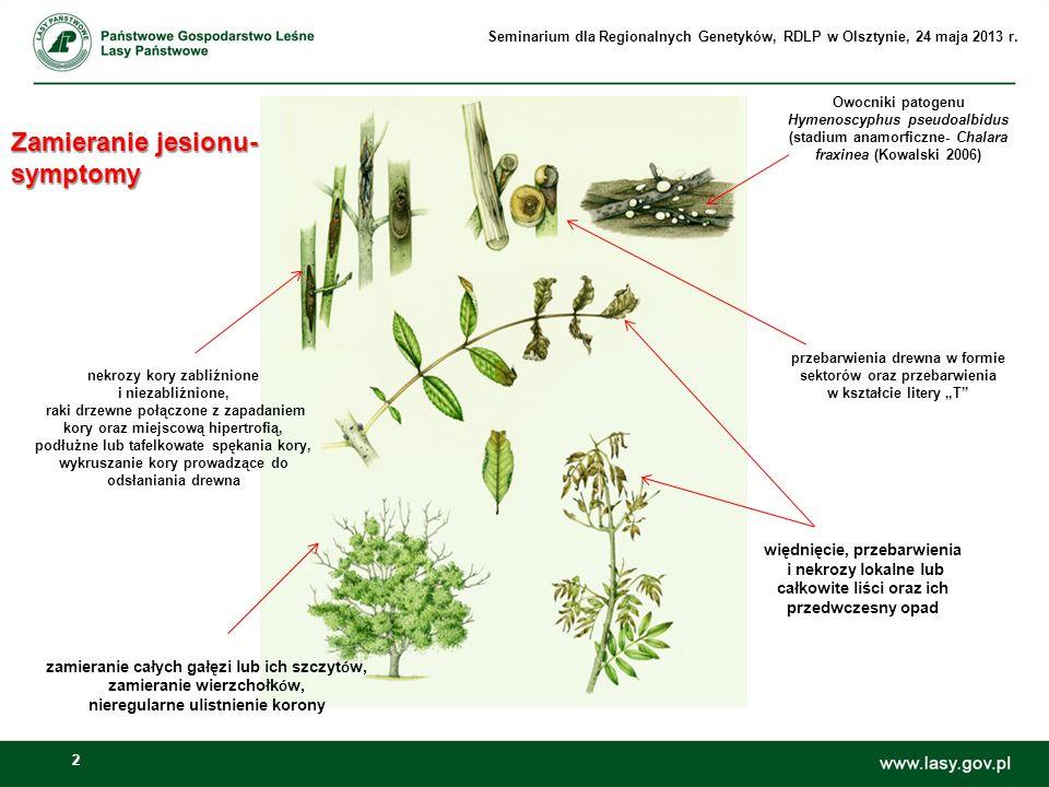 23 Ochrona jesionu wyniosłego w Polsce Ochrona jesionu wyniosłego w Polsce Zalecenia ochronne GIOŚ dotyczące typu siedliska: Łęgowe lasy dębowo- wiązowo- jesionowe (Kod siedliska 91F0 ), po badaniach monitoringowych w latach 2009- 2011 (Monitoring gatunków i siedlisk przyrodniczych ze szczególnym uwzględnieniem specjalnych obszarów ochrony siedlisk Natura 2000) Poprawienie sytuacji hydrologicznej lasów łęgowych (np.