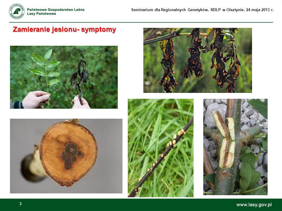 24 Ochrona jesionu wyniosłego w Polsce Ochrona jesionu wyniosłego w Polsce Zalecenia ochronne GIOŚ dotyczące typu siedliska: Łęgowe lasy dębowo- wiązowo- jesionowe (Kod siedliska 91F0 ), po badaniach monitoringowych w latach 2009- 2011 (Monitoring gatunków i siedlisk przyrodniczych ze szczególnym uwzględnieniem specjalnych obszarów ochrony siedlisk Natura 2000) Dla zachowania siedliska 91F0 konieczne jest: Ograniczenie usuwania jesionów, nawet kosztem pozostawienia części z nich do naturalnego rozkładu w lesie.