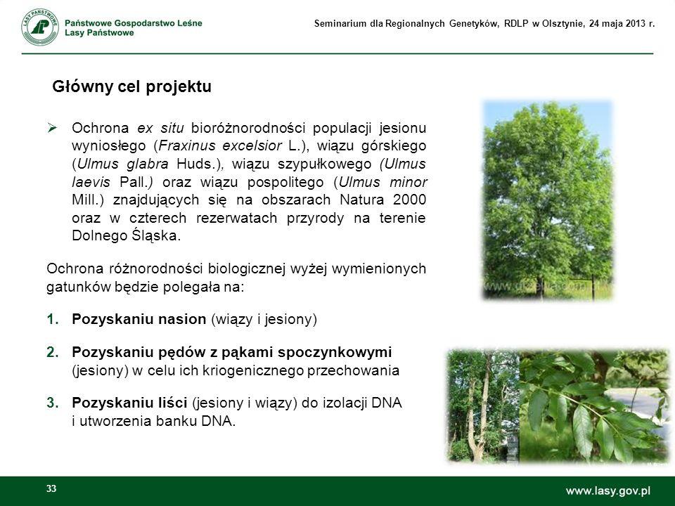 33 Główny cel projektu Ochrona ex situ bioróżnorodności populacji jesionu wyniosłego (Fraxinus excelsior L.), wiązu górskiego (Ulmus glabra Huds.), wi